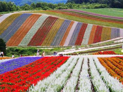 北海道、花とグルメ旅(増毛、美瑛、富良野、十勝)