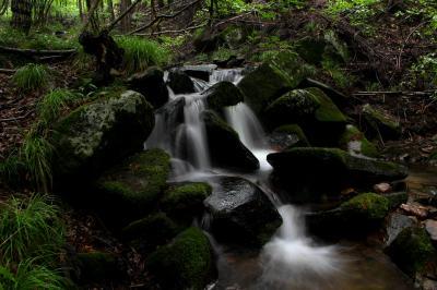◆深緑と雨に潤う東野の清流