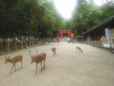 阿蘇美忍、5都物語~♪(^ー^)春日大社~奈良公園!