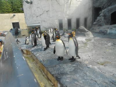 旭山動物園@4歳2ヶ月児(過去の写真も混在してます)
