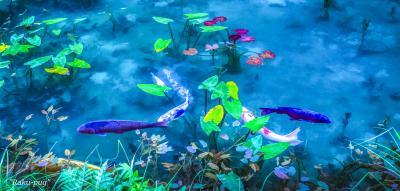 早朝の モネの池