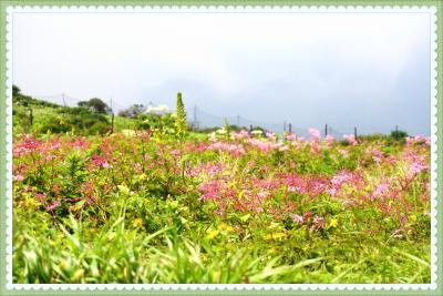 雲上のお花畑を見に夏の伊吹山へ~近くのバイカモも訪ねて~