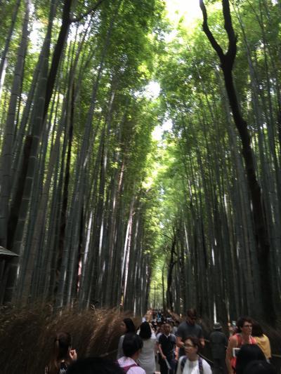 201705嵐山