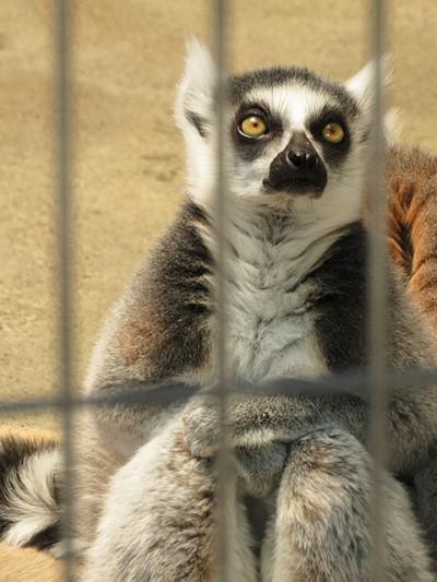 小さな動物園みっけ【上尾丸山公園しょうどうぶつえん】