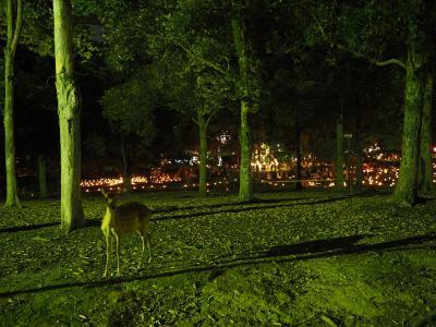 燈花会の夏、日本の夏   ~夕暮れの奈良公園~