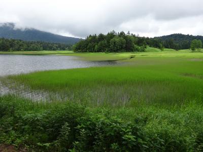 キッツ~イ!真夏の尾瀬を優雅に散策…のつもりが、大清水~尾瀬沼周遊ハイキング