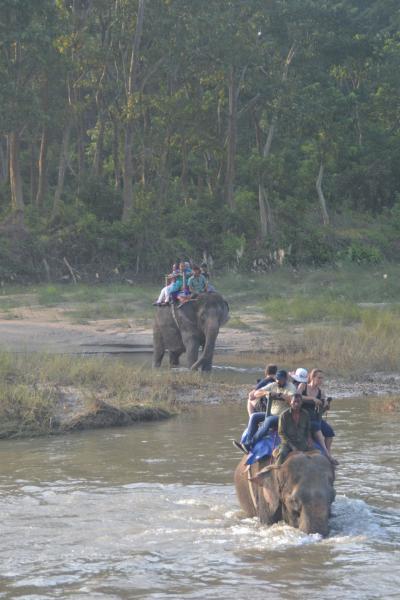 ネパール旅行記(6) チトワンでジャングルサファリ