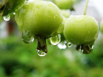 早朝ウォーキング途中雨で中止し帰宅・小雨降る庭の表情に自然の営みを感じて・・