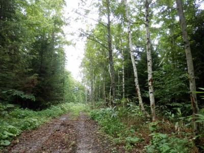 ブナの森を歩きに黒松内町へ