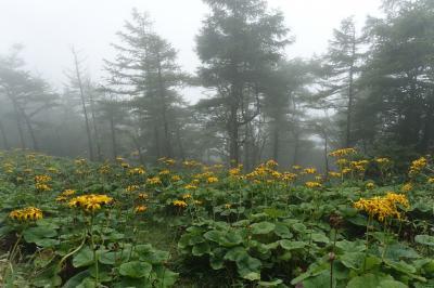 甘利山-千頭星山 南アルプスの雨登山