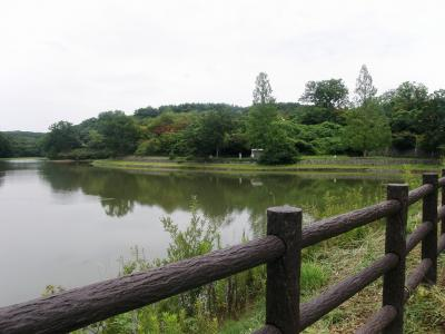 久しぶりに吉見町の八丁湖を訪れてみました