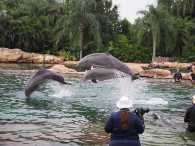 3世代でフロリダ② イルカにキス!ディスカバリー・コーブ