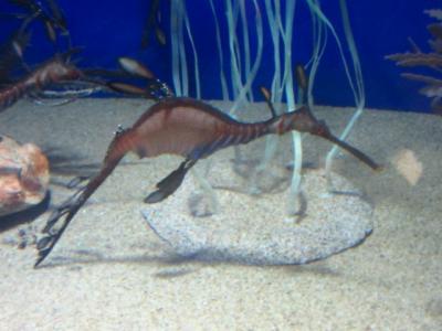 サンシャイン水族館の魚たち