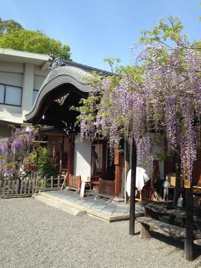 2016年4月:京都散歩(藤と桜の春日神社・ねことつつじの梅園神社)