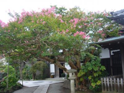 鎌倉の古寺散策と「百日紅」を尋ねて
