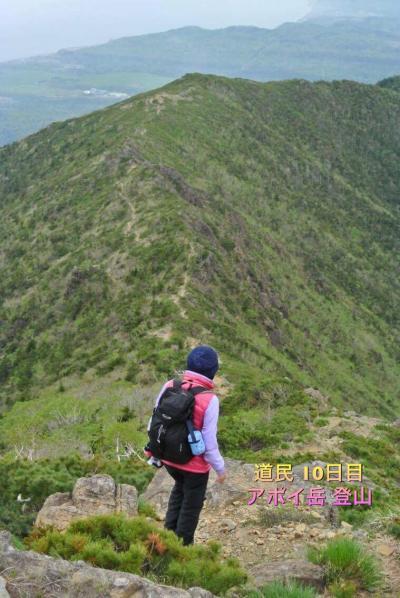 5月のアポイ岳は高山植物の楽園   2000m級の山に登った気分になれる不思議な魅力(13)
