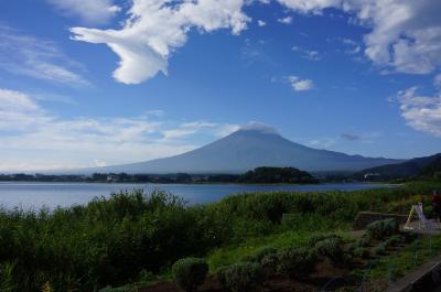 富士山と向日葵 2017 2日目