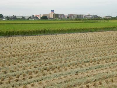 早朝散歩でリハビリ・・・2-1 夏から初秋にかけて変わりゆく水稲・野草の変化を楽しみながら歩く
