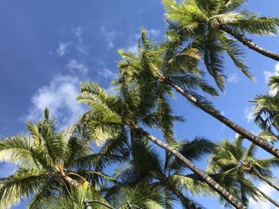 3世代8人ハワイ旅行5日目~最終日&お土産 ハナウマ湾~帰国