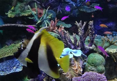 サンシャイン水族館。空飛ぶペンギンは見れるのか?