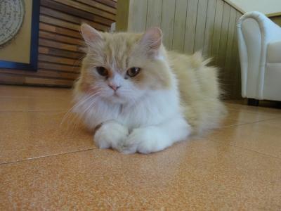 2016年9月 日本人経営のチェンマイの猫カフェ「They call me Cat」(2017年4月閉店)