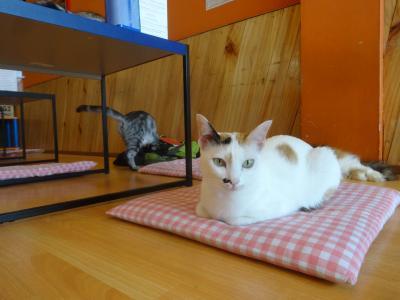 2016年9月 台湾スイーツも楽しめる猫カフェ「Cat On Ice」