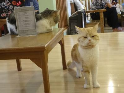 2016年9月チェンマイの老舗の猫カフェ「Maew Moth Cat Cafe」