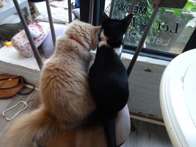 2017年5月 チェンマイの猫カフェの定番「Something Like Cat」
