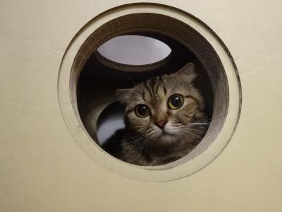 2017年5月 チェンマイ空港近くの猫カフェ「Because of Cat」