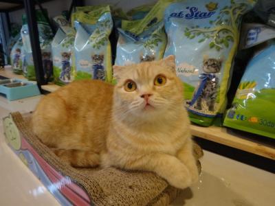 2017年6月 私の定番猫カフェ「Because of cat」