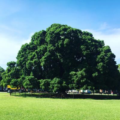 夏の台南 2017 二日目