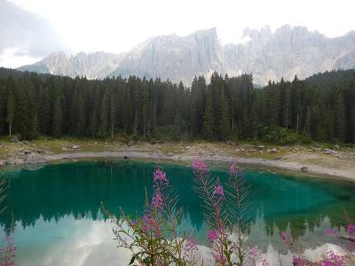 世界遺産ドロミテとアルプス展望ルート10日間の旅〔25〕カレッツア湖散策で見られた高山植物