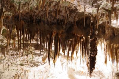スロヴェニアのポストイナ鍾乳洞  旧ユーゴスラヴィア5か国周遊の旅 17