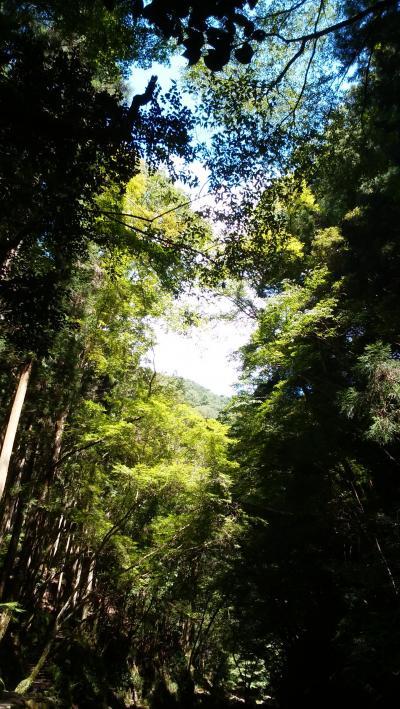 ひぐらしの声を聴こう!赤目四十八滝を歩く。