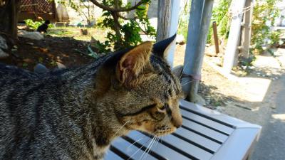 福岡の猫パラダイス島である『相島』に久し振りに再訪して見た。【猫を探しに相島散策&島カフェで昼食編】