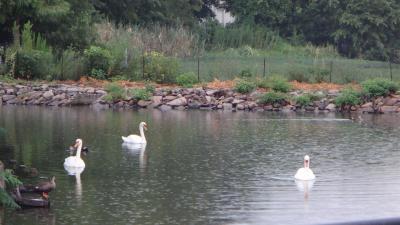 市立病院からの帰り、昆陽池公園を抜けて帰りました。
