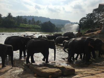 【タイ・スリランカ 象とカレーを巡る旅】⑤ピンナラワ~コロンボ