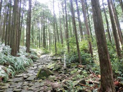 世界遺産熊野古道 伊勢路コースを歩く  <馬越峠と天狗倉山>