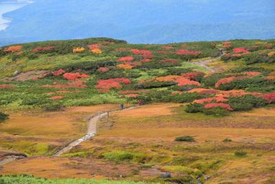 旭岳姿見の色鮮やかな紅葉 2017(北海道大雪山)