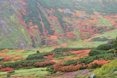 旭岳据合平で見られる大雪山の絶景紅葉 2017(北海道)