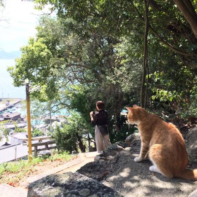 どこかにマイルで行く、香川・高松の旅-3-猫とアートの男木島編