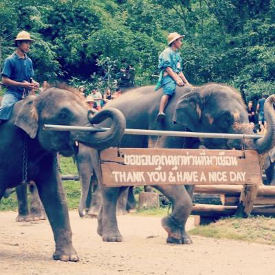 20170909-0910@チェンマイ_Maesa Elephant Camp