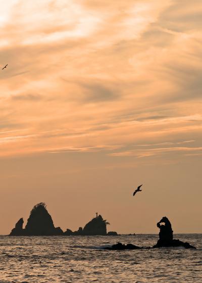 野鳥撮影記録(2017年9月)その6・西伊豆