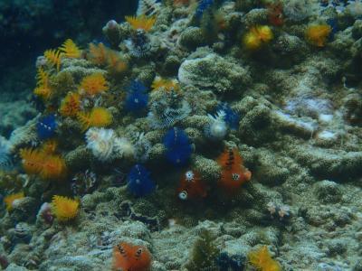 タオ島ダイビング・まったりサムイ島旅行