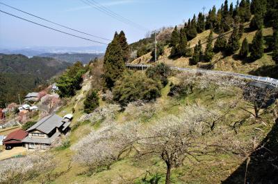 奈良県の広橋梅林、大阪府の観心寺梅園