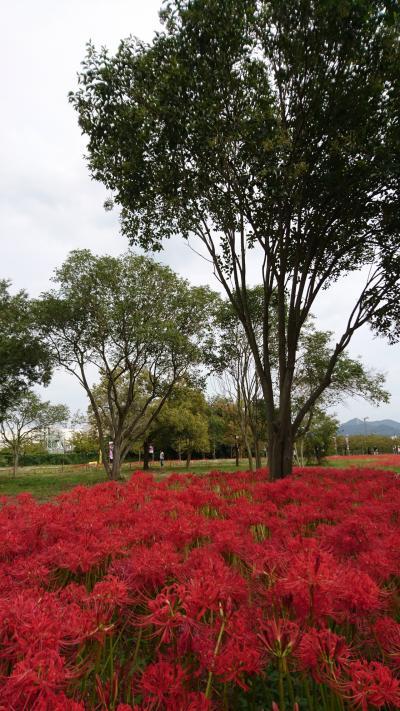 岡山☆児島湖花回廊&備中国分寺