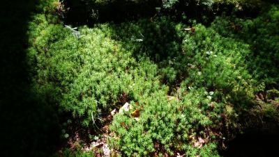白駒池・苔の森へ
