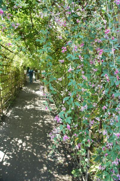 20170924 向島 向島百花園の萩のトンネル…には、早かったかな? → 古民家カフェ こぐまの焼きオムライス