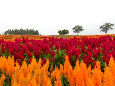 秋を求めて~自然と温泉を堪能~那須高原へ2泊3日旅