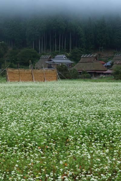 京都 初秋の美山かやぶきの里と源光庵